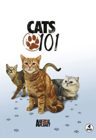 Cats 101 Kediler